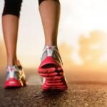 menschlicher Fuß Aufbau