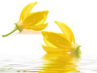 Ylang Ylang Aromatherapie