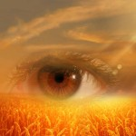 Pflege Augenpartie
