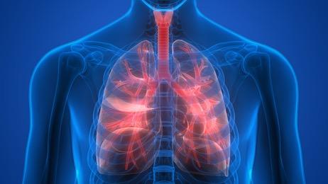 Atmungssystem des Menschen - Funktion | beauty blog: Haut